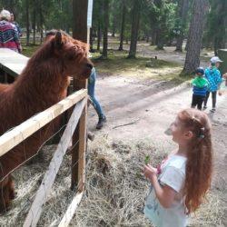 Lastenkerhojen retki Korpikeitaan eläinpuistoon